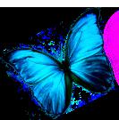 logo_traci